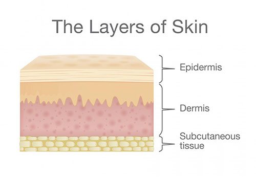 The layers of skin