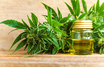 The Healing Properties of Medical Cannabis Oil